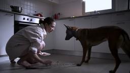 Dog Leash - Resen (2012)